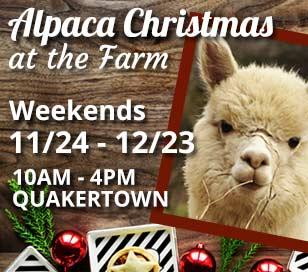 ALPACA CHRISTMAS AT HARLEY HILL FARM in Harley Hill Farm Alpacas