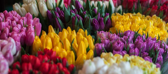 Spring is a wonderful time to enjoy shopping, dining, and the wonderful sights in Warrington, Bucks County PA